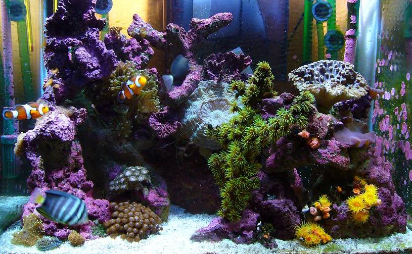 A saltwater fish tank with mini coral reef